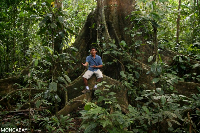Indigenous communities in the Amazon have stewarded the region's forests and biodiversity for generations, yet until recently, then were often excluded from conservation initiatives.