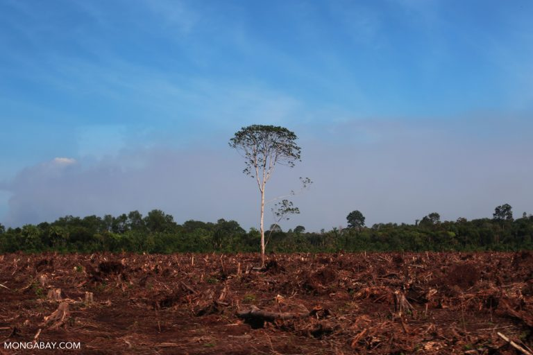 Clearing by a community of transmigrants for an oil palm plantation in Indonesia.