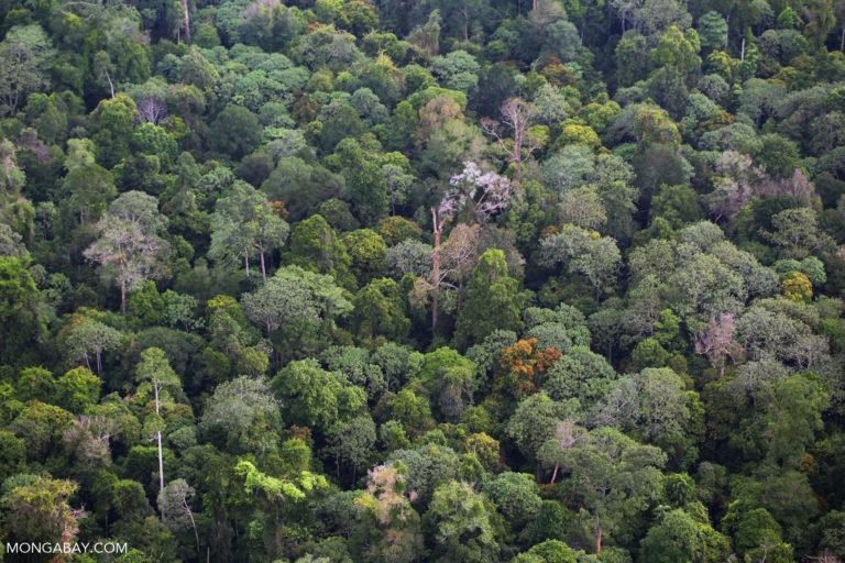 Sumatran rainforest in Riau in 2014. Photo by Rhett A. Butler for Mongabay