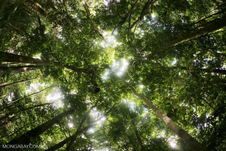 Rainforest in Australia. All photos by Rhett A. Butler.