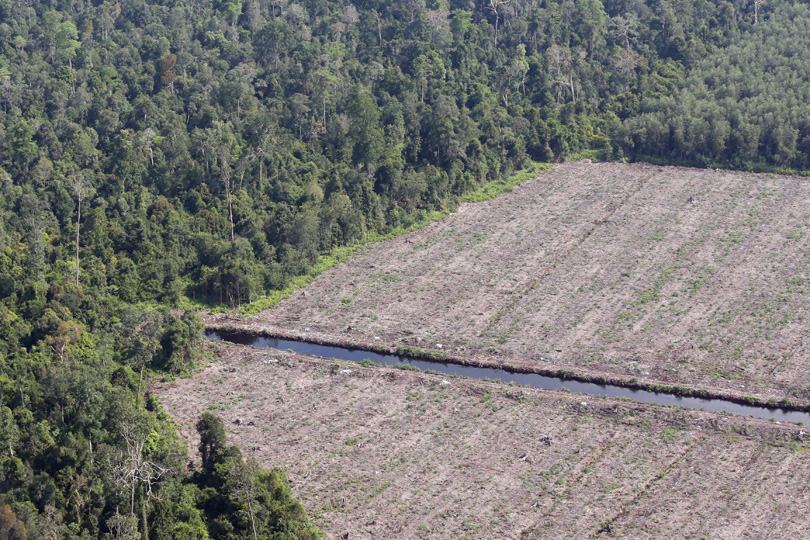 A peatland forest cleared for pulp and paper in Riau, Sumatra. Photo by Rhett A. Butler