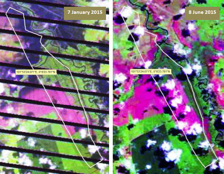 Landsat images dated January 7 and June 8 show forest clearing in LIH's concession subsequent to Wilmar's signing of the Indonesian Palm Oil Pledge in September 2014. Wilmar says the clearing was done by encroachers and and that LIH put a stop to their activities. Images: Greenomics
