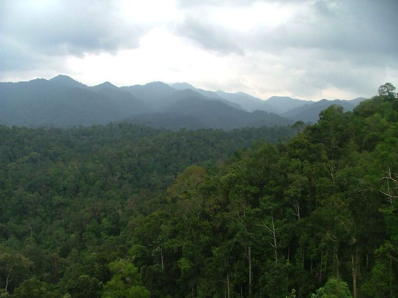 Part of the study area in central Sumatra. Photo credit: WWF-KemenLHK.