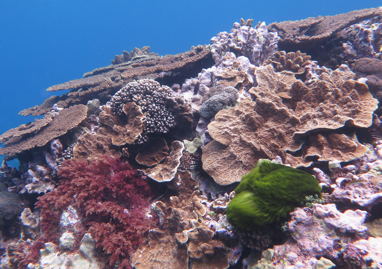 Coral reef. Photo taken by Dr. Mia Hoogenboom.