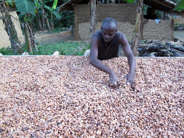 Cocoa farmer in Mmaniaye, Ghana.