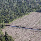 Peat forest cleared for pulp and paper in Riau, Sumatra. Photo by Rhett A. Butler