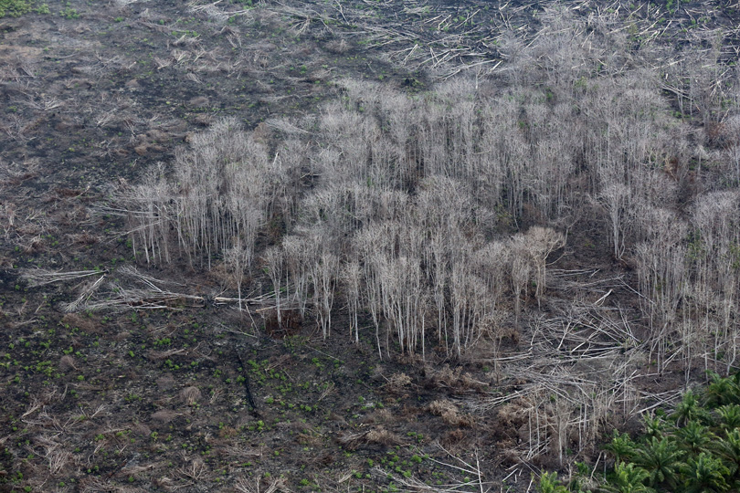 Burned forest in Riau Province, Indonesia. Photo by Rhett A. Butler