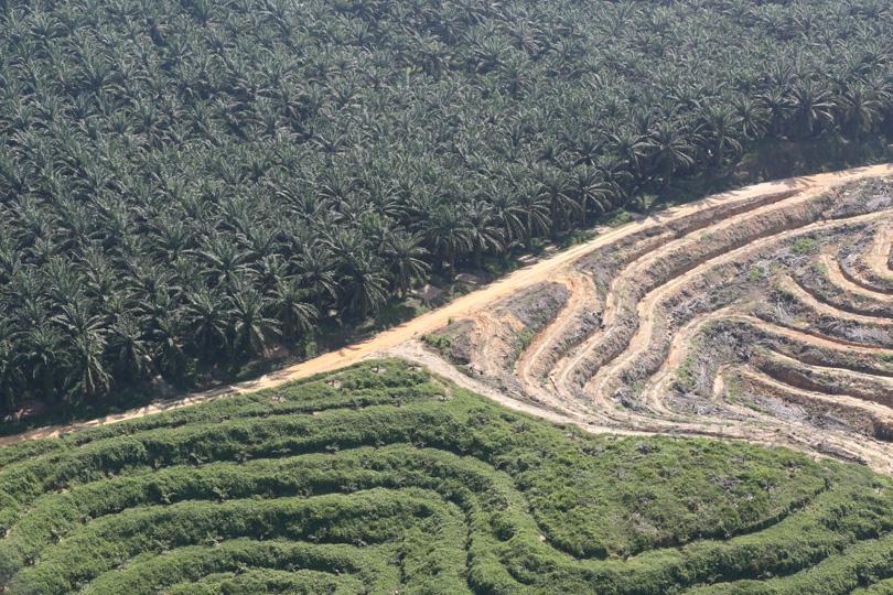 Oil palm in Riau, Sumatra. Photo by Rhett A. Butler