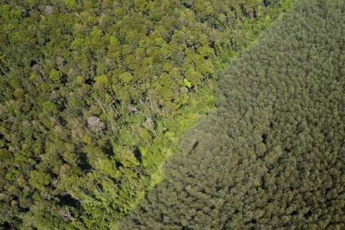 Natural forest and acacia plantation in Riau, Sumatra. Photo by Rhett A. Butler
