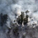 Burning peat forest and oil palm in Riau, Sumatra. Photo by Rhett A. Butler