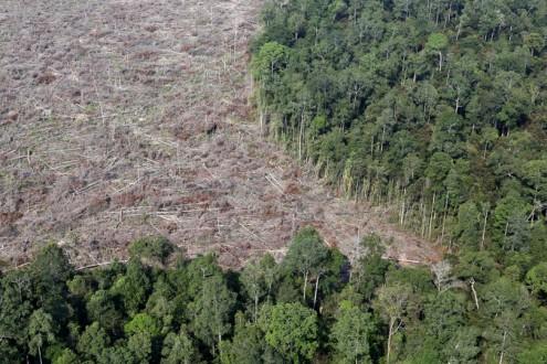 Illegal encroachment for palm oil production in Riau, Sumatra. Photo by Rhett A. Butler