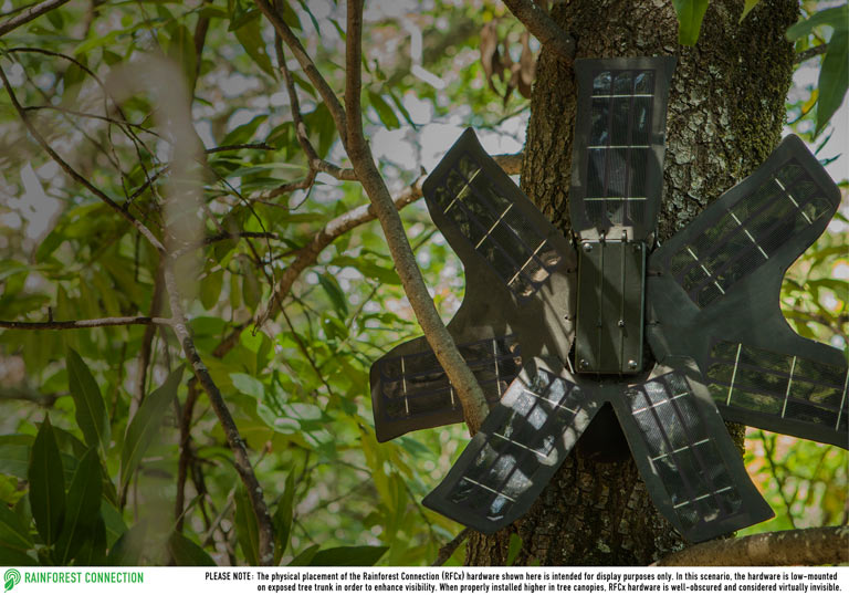 Applying available technologies for conservation: mobile phones detect and alert authorities about illegal logging in vast swaths of forest in real time. Courtesy of Rainforest Connection.