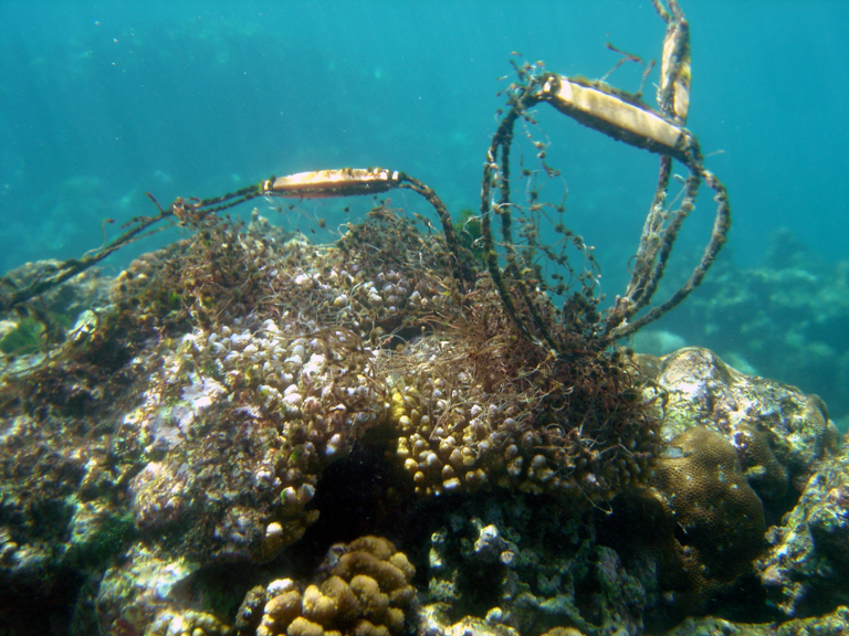 Discarded fishing gear tangles a reef. Photo credit: David Burdick / NOAA.
