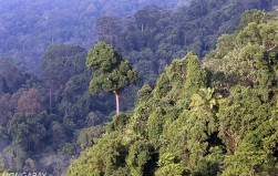 indo burma forests biodiversity at risk due Indo-burma, asia pacific this region contains both tropical and subtropical moist broadleaf forests fauna here include birds, freshwater turtles, and some of the world's largest freshwater fish, including giant catfish and julien's golden carp.
