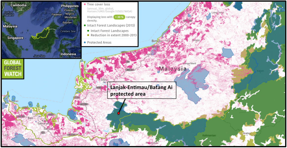 Sarawak's tree cover loss is focussed near its coast and consists of both deforestation and tree cover harvesting. Intact forest landscapes (IFLs) are areas of undisturbed primary forest large enough to retain their original levels of biodiversity. Of Sarawak's few remaining IFLs, 50,000 hectares were lost between 2001 and 2013. The state's largest non-degraded IFL