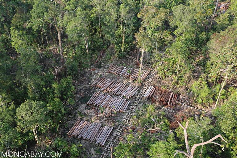 Logging in Sumatra. Photo by Rhett A. Butler.