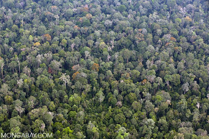 Lowland rainforest in Riau, Sumatra. Photo by Rhett A. Butler.