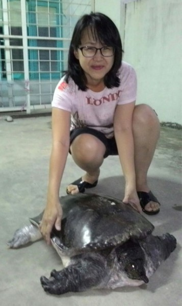 Serene Voo Nyuk Wei and the freshwater turtle that she rescued.