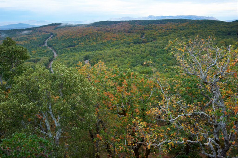 Bouhachem from above. This photo, taken from a high rocky outcrop, shows the vibrance of the forest as autumn turns to winter. Photo credit: Andrew Walmsley.