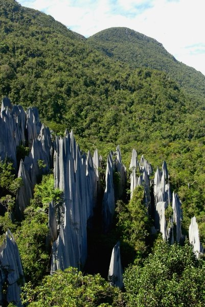 Sarawak's mountainous rainforest contains many unique formations, like some of the world's biggest caves and the limestone pinnacles of Gunung Mulu National Park. Photo by Morgan Erickson-Davis.