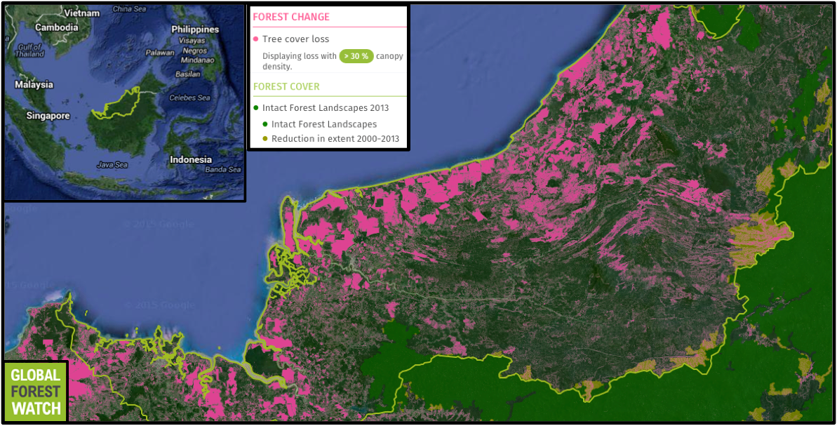 Intact Forest Landscapes (IFLs) are tracts of primary forest big enough and undisturbed enough to retain their original levels of biodiversity. Compared to neighboring Kalimantan, Sarawak has few IFLs; and of those, a large proportion have been degraded since 2000.