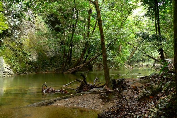 Sarawak has lost much of its primary forest to development. Photo taken in Gunung Mulu National Park by Morgan Erickson-Davis.
