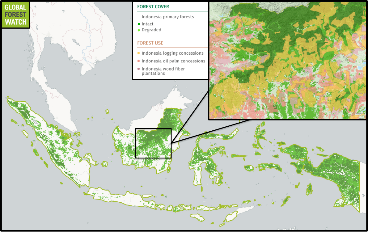 Global Forest Watch shows much of Indonesia's primary forests are absent as of 2000, and further degraded as of 2012. In Kalimantan, commodity concessions overlie large tracts of primary forrest that.