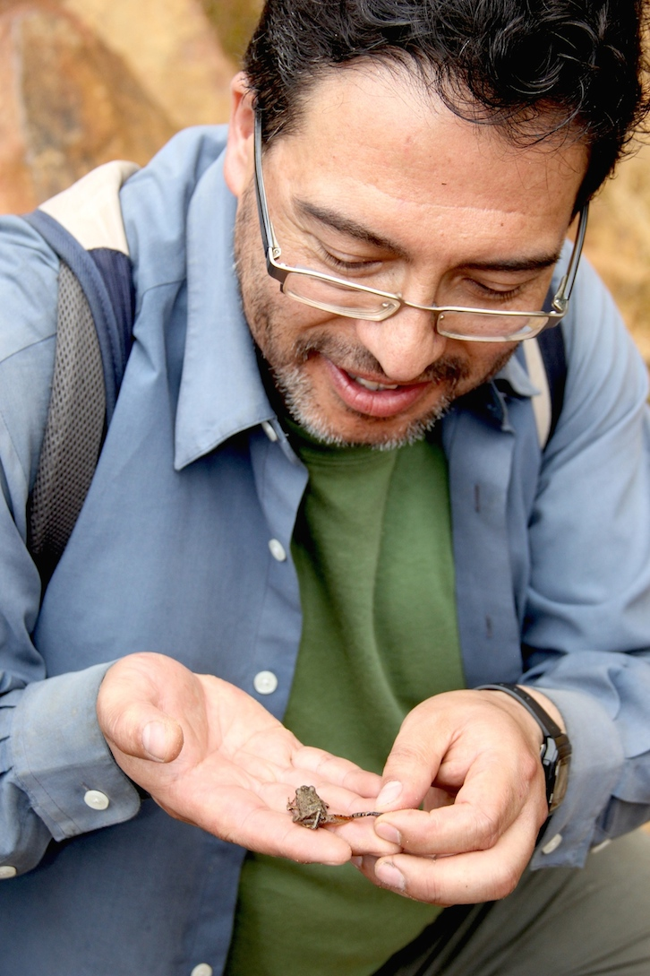 James Aparicio shows the diagnostic orange legs of the new Oreobates frog. Photo by Morgan Erickson-Davis.