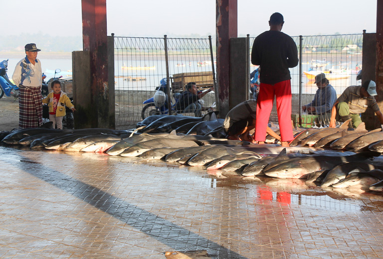 : A local man watches preparations for a shark auction with his granddaughter in Tanjung Luar port, Lombok. Photo credit: Melati Kaye.