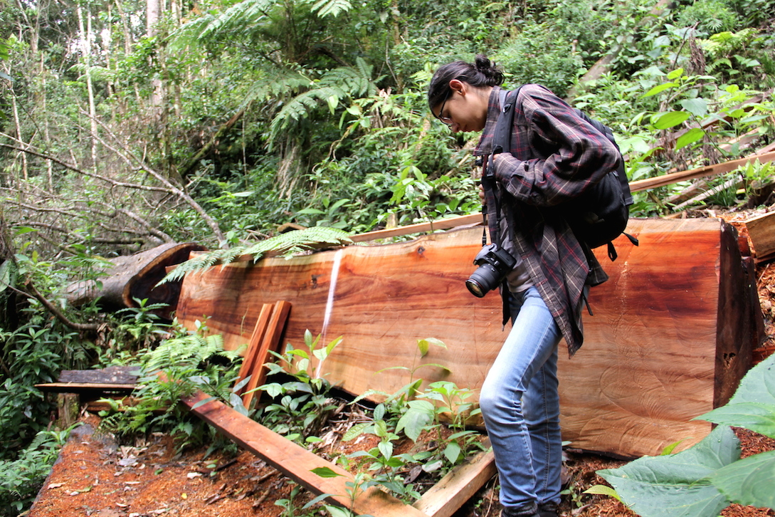 Photographer Giomar De Mesa Salinas pauses near a tree felled for lumber in Madidi National Park. Photo by Morgan Erickson-Davis.