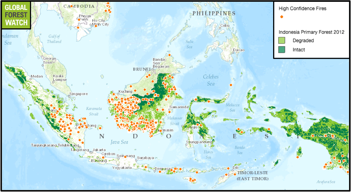 NASA data from Global Forest Watch shows fire activity during the past week (8/10 to 8/17). Most fires are currently occurring on Kalimantan, and many are happening in primary forest.