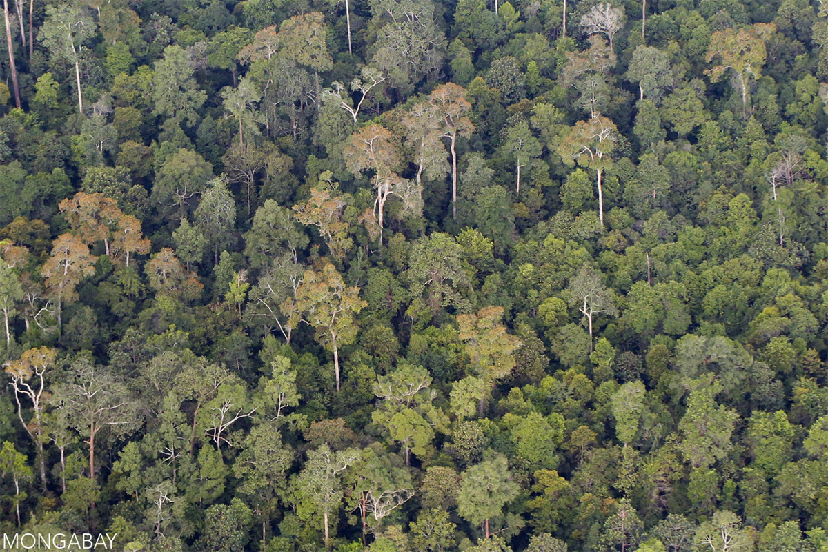 Rainforest in Sumatra. Photo by Rhett A. Butler