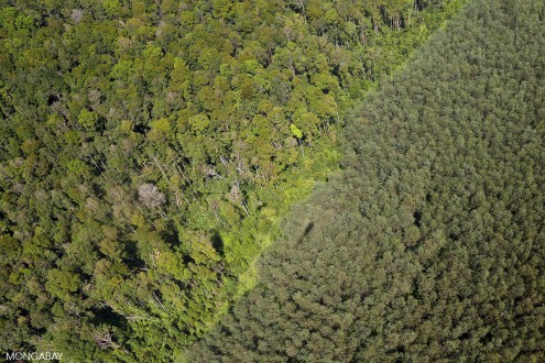 Natural forest and acacia plantation in Riau. Photo by Rhett A. Butler