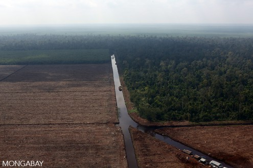 Pulp and paper plantation on peatland in Riau. Photo by Rhett A. Butler