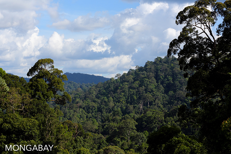 Forest in Bukit Tigapuluh. Photo by Rhett A. Butler