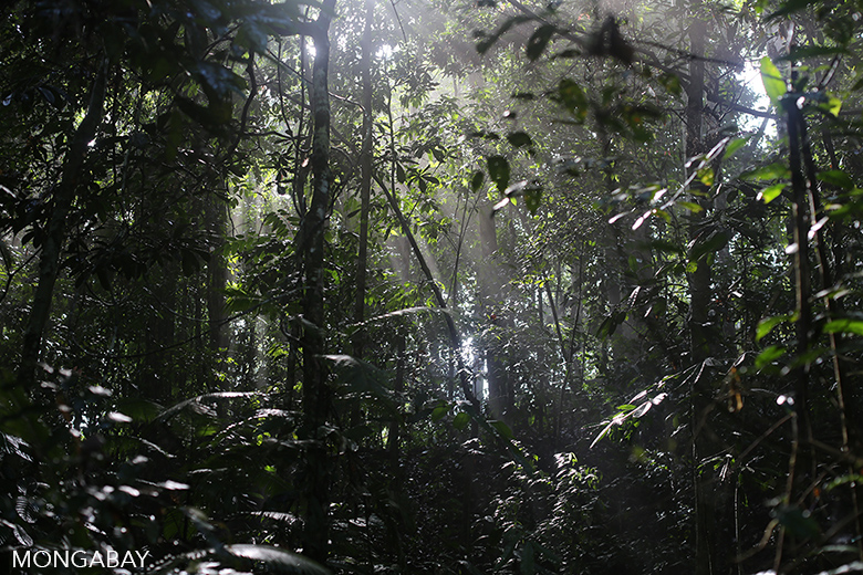 Lowland rainforest in Bukit Tigapuluh. Photo by Rhett A. Butler