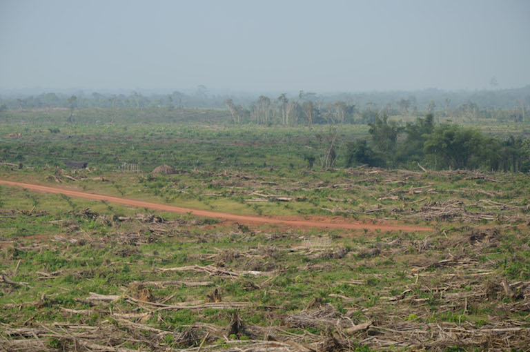 Palm oil companies in Liberia have obtained large plots of land through concession agreements with the government. Sime Darby is clearing trees to make way for palm plants. Photo by Sara Jerving.