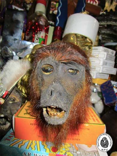 Dessicated head of a red howler monkey (Alouatta seniculus) available for purchase at La Parada market in Lima. Photo courtesy of Neotropical Primate Conservation