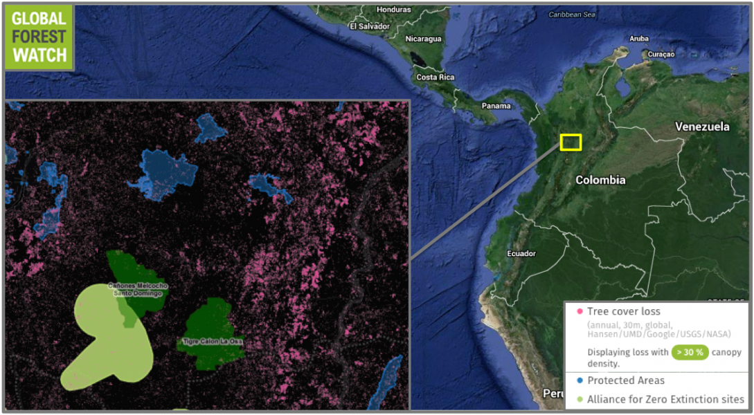 Global Forest Watch shows the region comprising the two new reserves (dark green) lost around 66,000 hectares — or 6.5 percent — of its tree cover from 2001 through 2014. The area also features an Alliance for Zero Extinction (AZE) site, which intersects with one of the new reserves. AZE sites contain critical habitat for endangered species with limited ranges and populations found nowhere else on the planet. This particular AZE site is home to the Mesopotamia beaked toad (Rhinella rostrata), the Sonson frog (Atopophrynus syntomopus), and the Argelia robber frog (Pristimantis bernali), which are all listed as Critically Endangered by the IUCN. Location and extent of the new reserves courtesy of  Nature and Culture International.