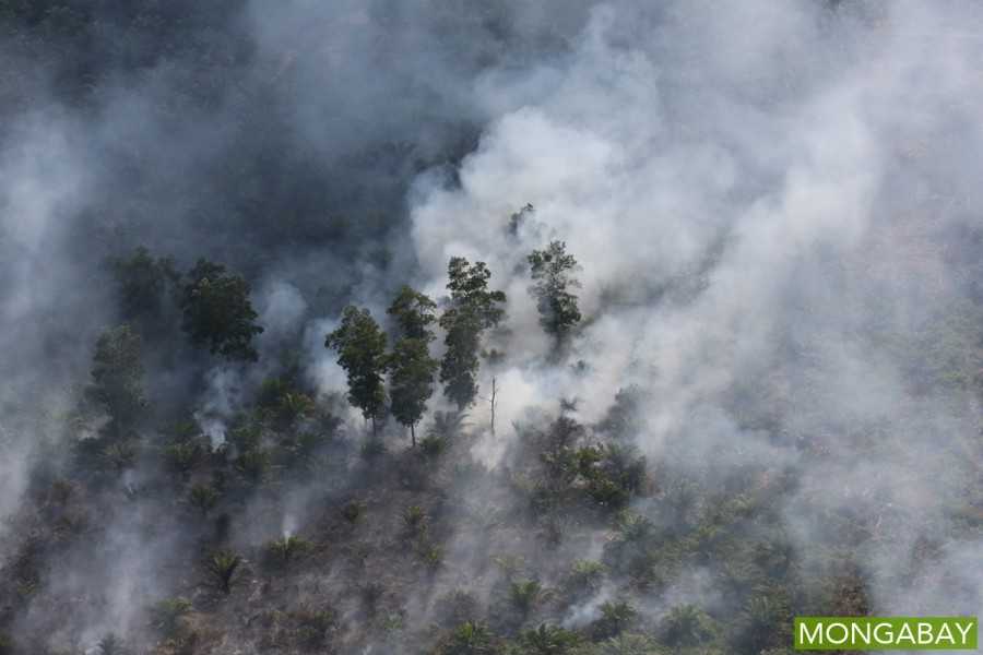 An oil palm plantation burns in Riau, Indonesia, earlier this year. Photo by Rhett A. Butler