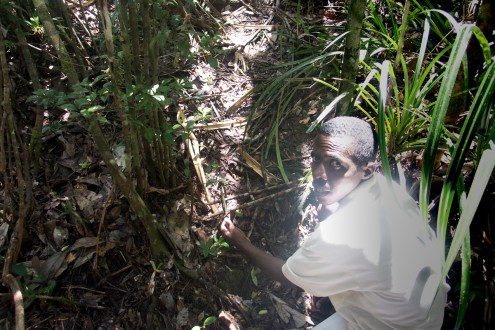 Armand Marozafy dismantling a poacher's trap within Masoala National Park in Madagascar in 2004. Photo by Rhett A. Butler.