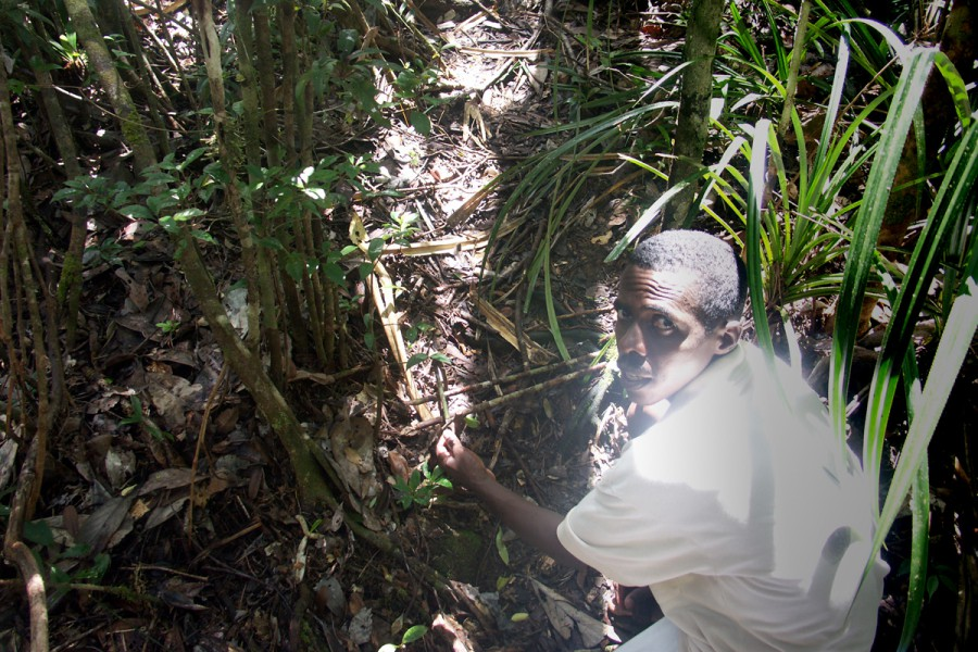 Armand Marozafy dismantling a poacher's trap within Masoala National Park in Madagascar in 2004. Photo by Rhett A. Butler.