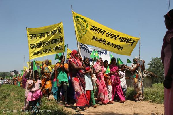 Women from the Mahan forest region walk through the village towards a local shrine in celebration of the Supreme Court of India's decision to cancel the licenses of 214 coal blocks, including those of Essar and Hindalco's Mahan. Greenpeace India and Mahan Sangharsh Samiti have been engaged in a long running campaign over proposed open cast coal mining in the area. Photo courtesy of Greenpeace.
