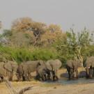 Elephants at water hole, Chobe, Botswana