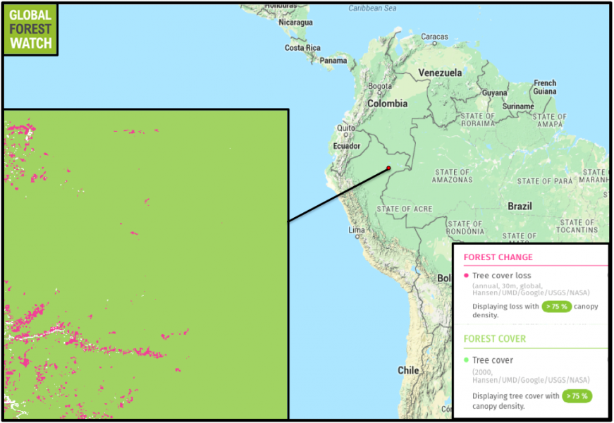 Global Forest Watch maps show tree cover loss in the vicinity of the United Cacao plantation on top of forest with 75 percent canopy density. Satellite images don't turn up tree cover loss on the plantation before 2012 (above), only after 2013 (below). The company began clearing the land to plant cacao in May 2013. By August 2014, crews had cleared more than 2,100 hectares.