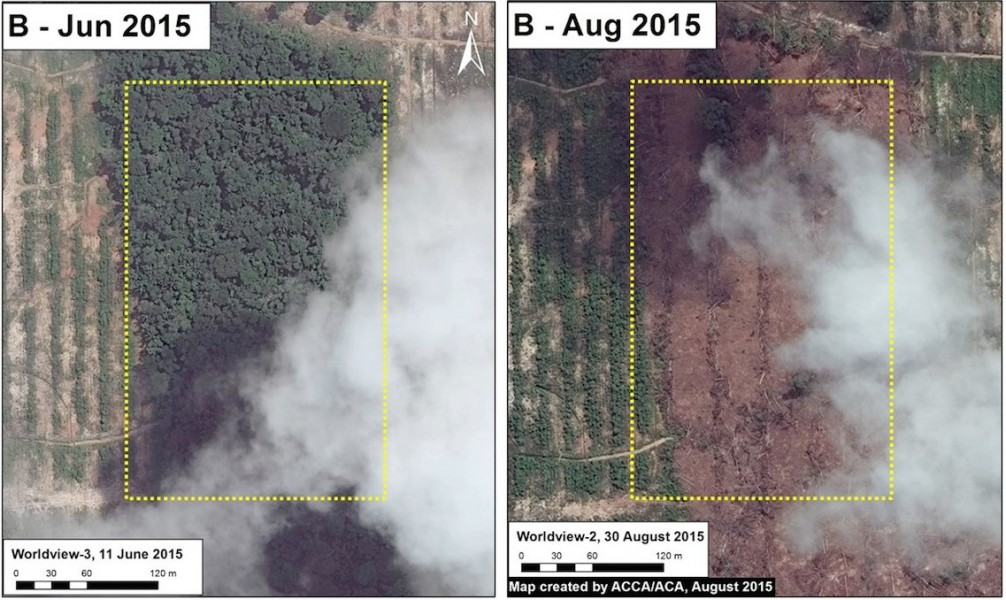 Zoomed-in aerial imagery of recent forest clearing in the United Cacao plantation. Data from WorldView from Digital Globe (NextView); image courtesy of MAAP.