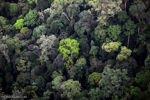 Rainforest in Sabah, Malaysia. Malaysia has reported a steep increase in forest cover to FAO, a result of changing how it classifies forest cover.