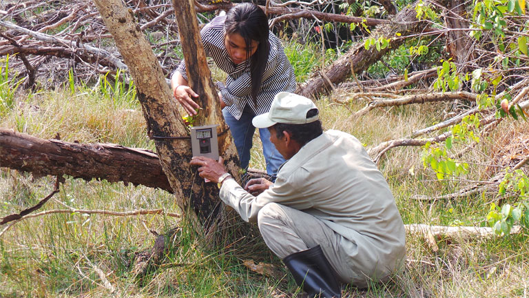 Ret Thaung, standing, and Kam Thorn, a ranger from the Cambodian Ministry of Environment, setting up a camera trap at Botum Sakor National Park. Photo by Vanessa Herranz Muñoz courtesy of Fauna & Flora International