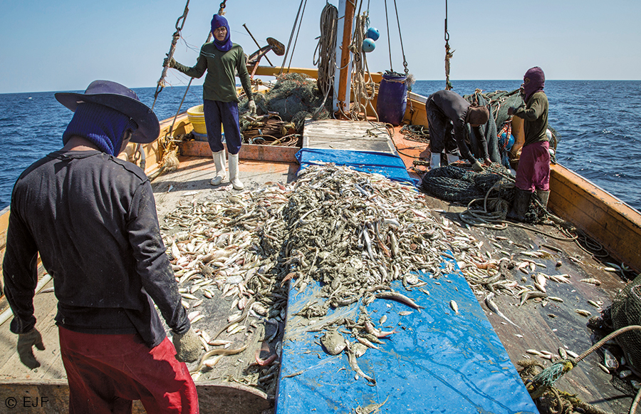 Workers unload their catch atop the deck of a fishing boat in Thai waters. Photo courtesy of the Environmental Justice Foundation
