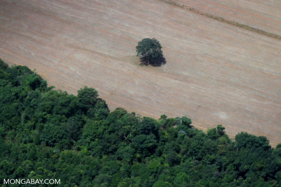 Deforestation in the Brazilian Amazon. Photo by Rhett A Butler